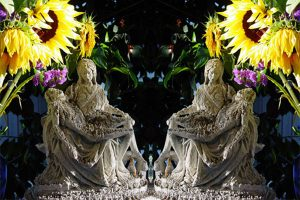 pieta_sunflower